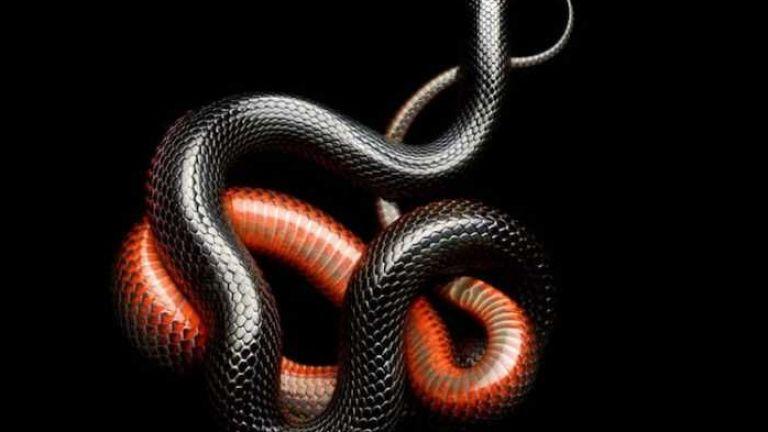 "Змии -""картини"""