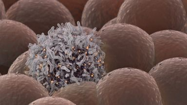 Учените за рака: Той е следствие от човешката дейност