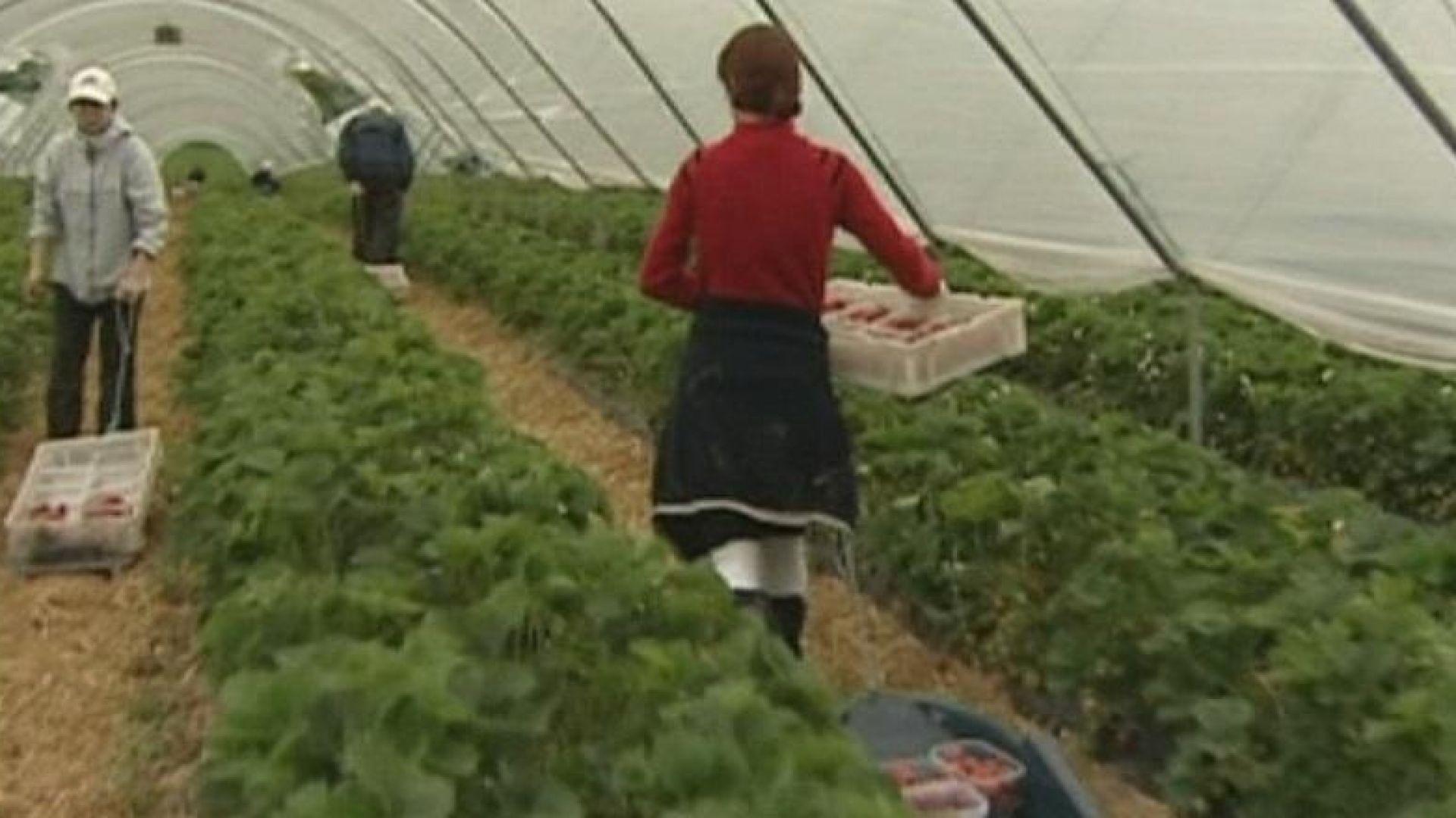 Британската полиция погна робския труд