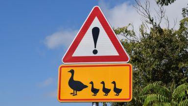 Прокуратурата проверява пътните знаци