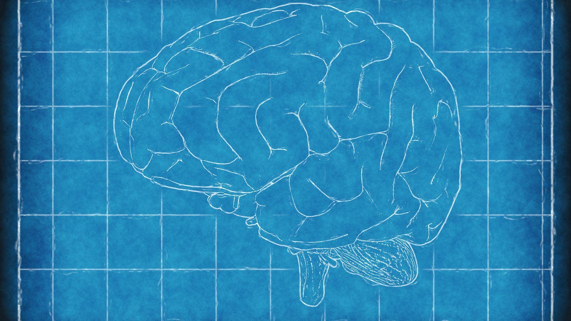Защо човешкият мозък е толкова голям?