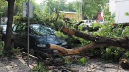 Дърво премаза автомобил в центъра на Пловдив
