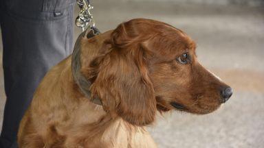Кучето Ричи откри близо 200 кг хероин в турски ТИР с плочки