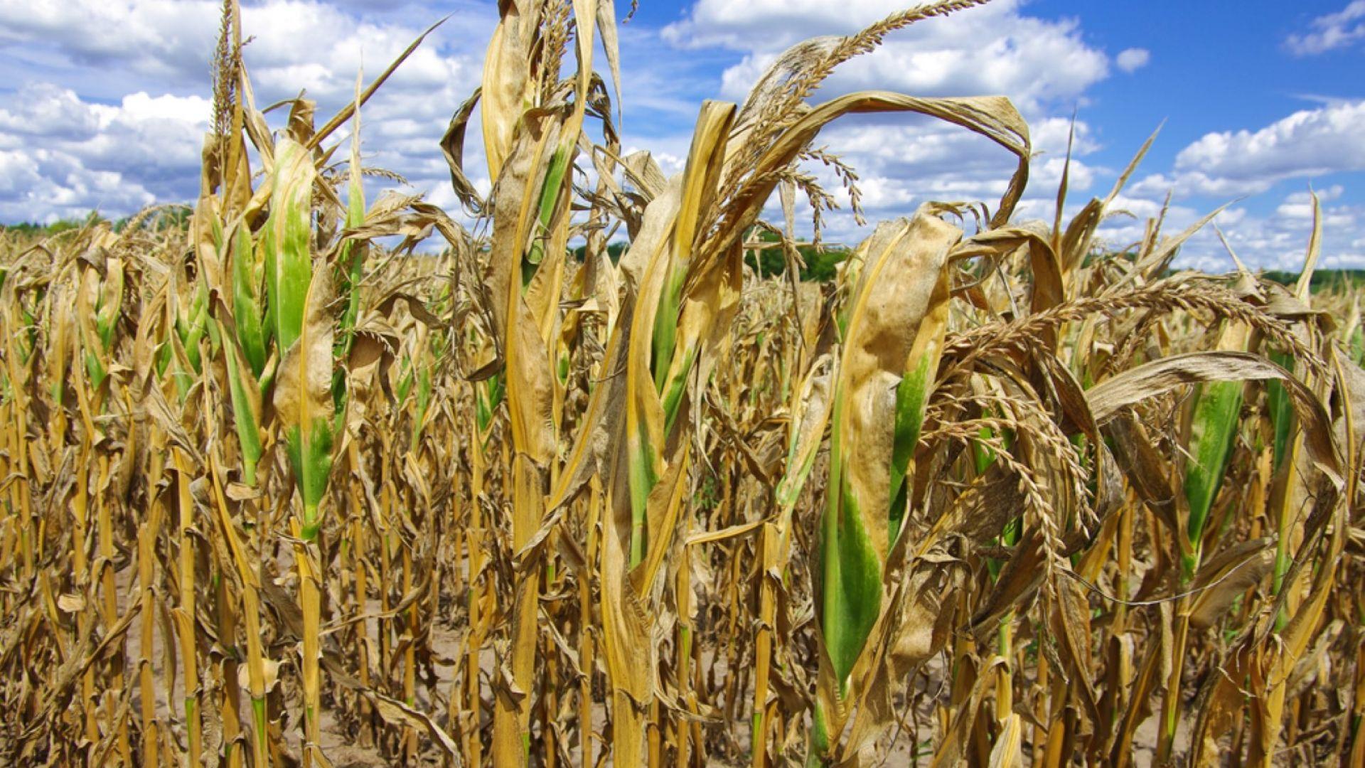 Катастрофално положение с есенните посеви, сушата продължава