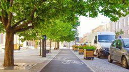 Дърветата в градовете пестят пари и енергия