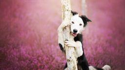 Алисия Змисловска - фотографиращата кучета