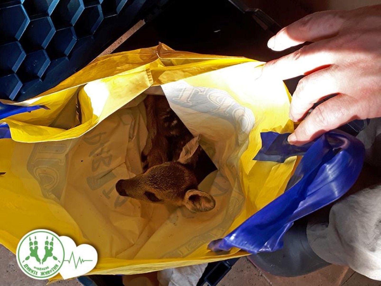 Гъбарите оставили животинката в собствената й урина в найлонова торба