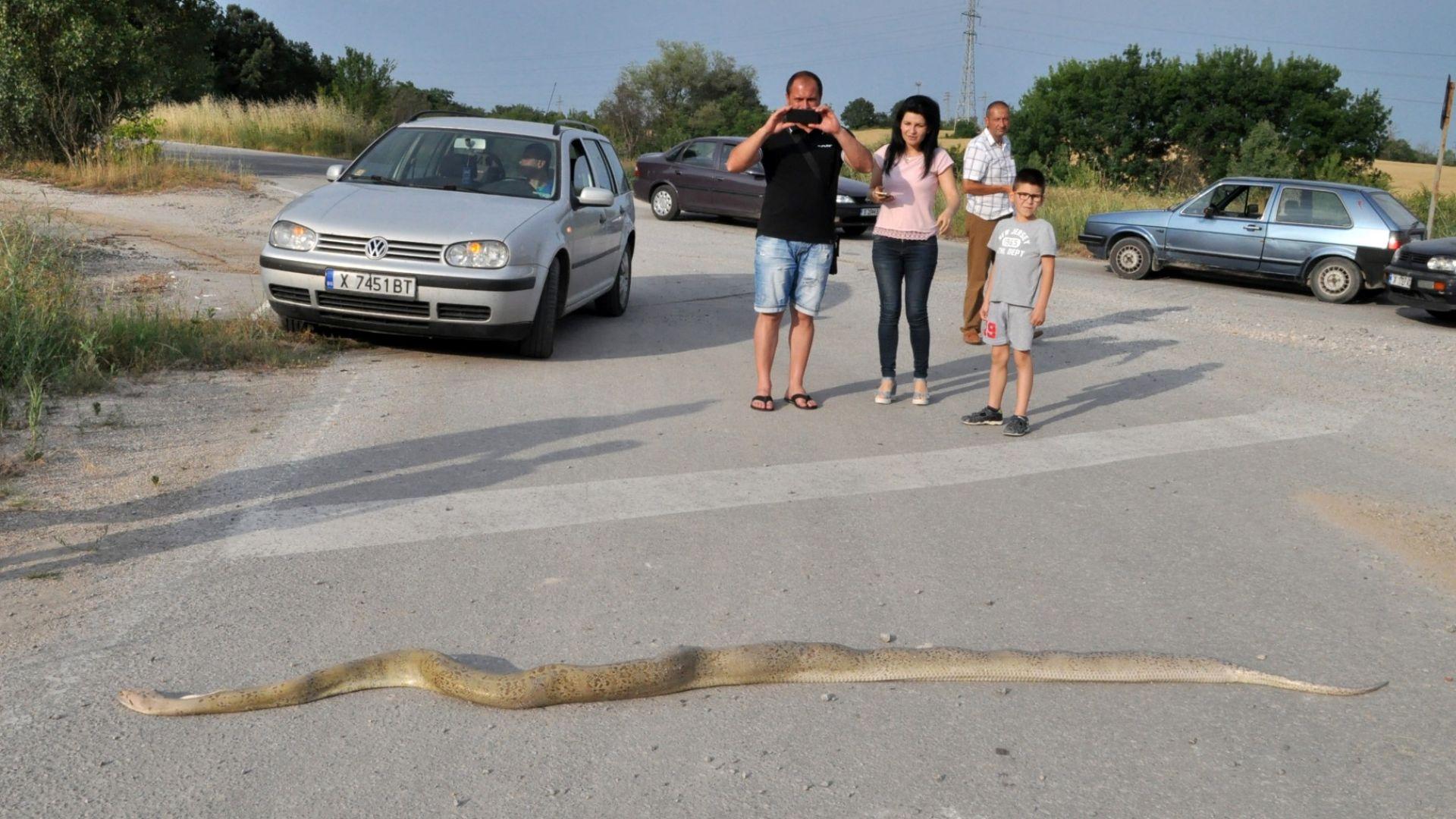 3-метров питон бе намерен край хасковско село