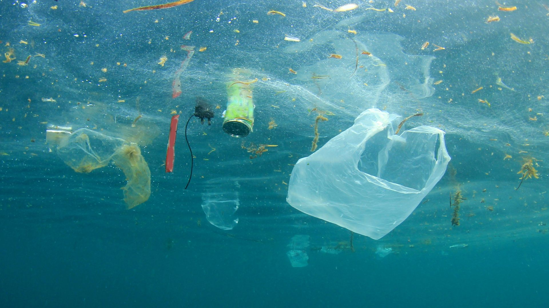 Без пластмасови торбички: #НеМерсиНосяСи във Варна