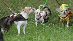 """""""Sofia Puppy Parade"""" стартира на 10-и юни в Южния парк"""
