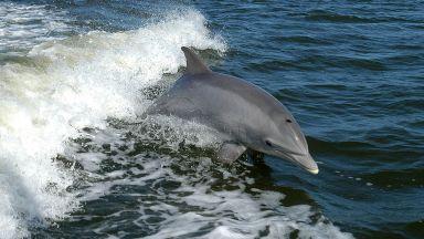 """Делфините се наричат с индивидуални """"имена"""""""