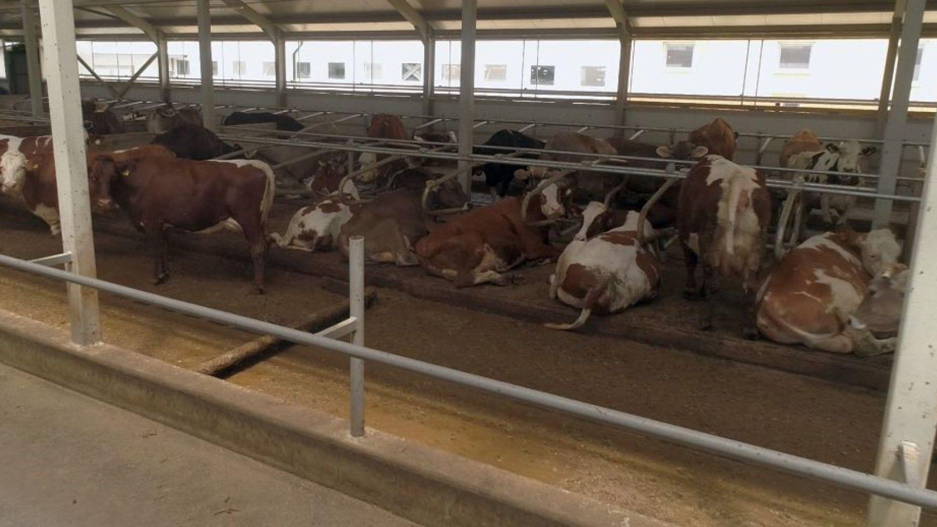 Разсрочват кредити на животновъди и картофопроизводители