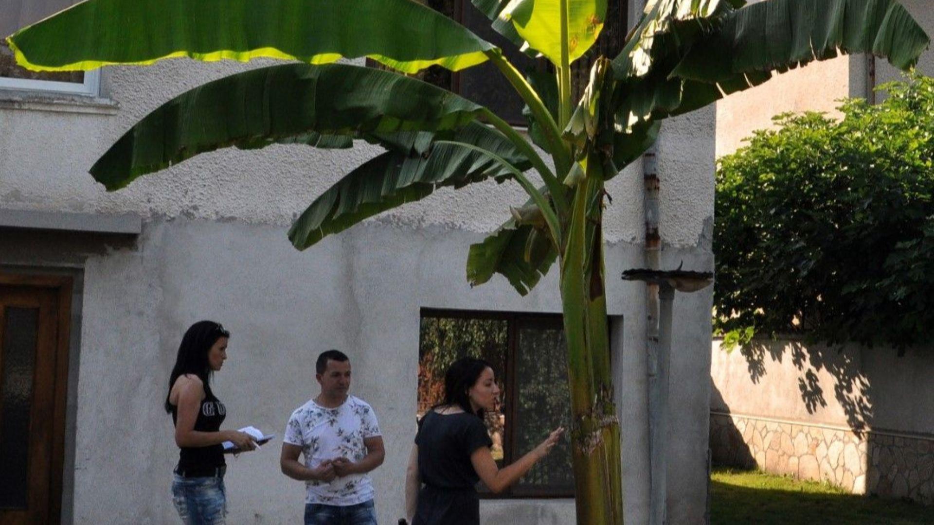 Собственик на палмите е Борис Василев