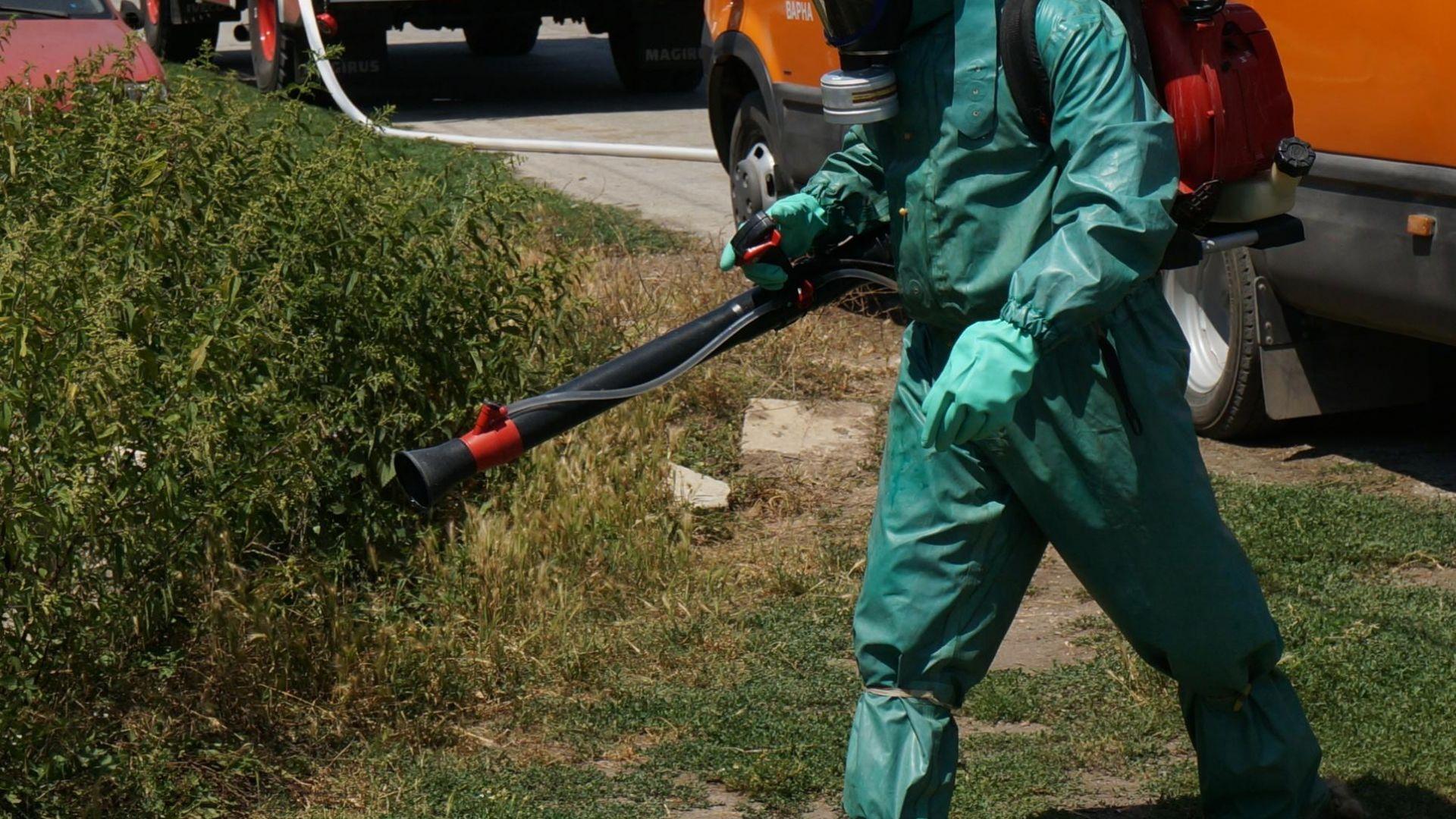 В Пловдивско започва дезинфекцията срещу чумата по животните