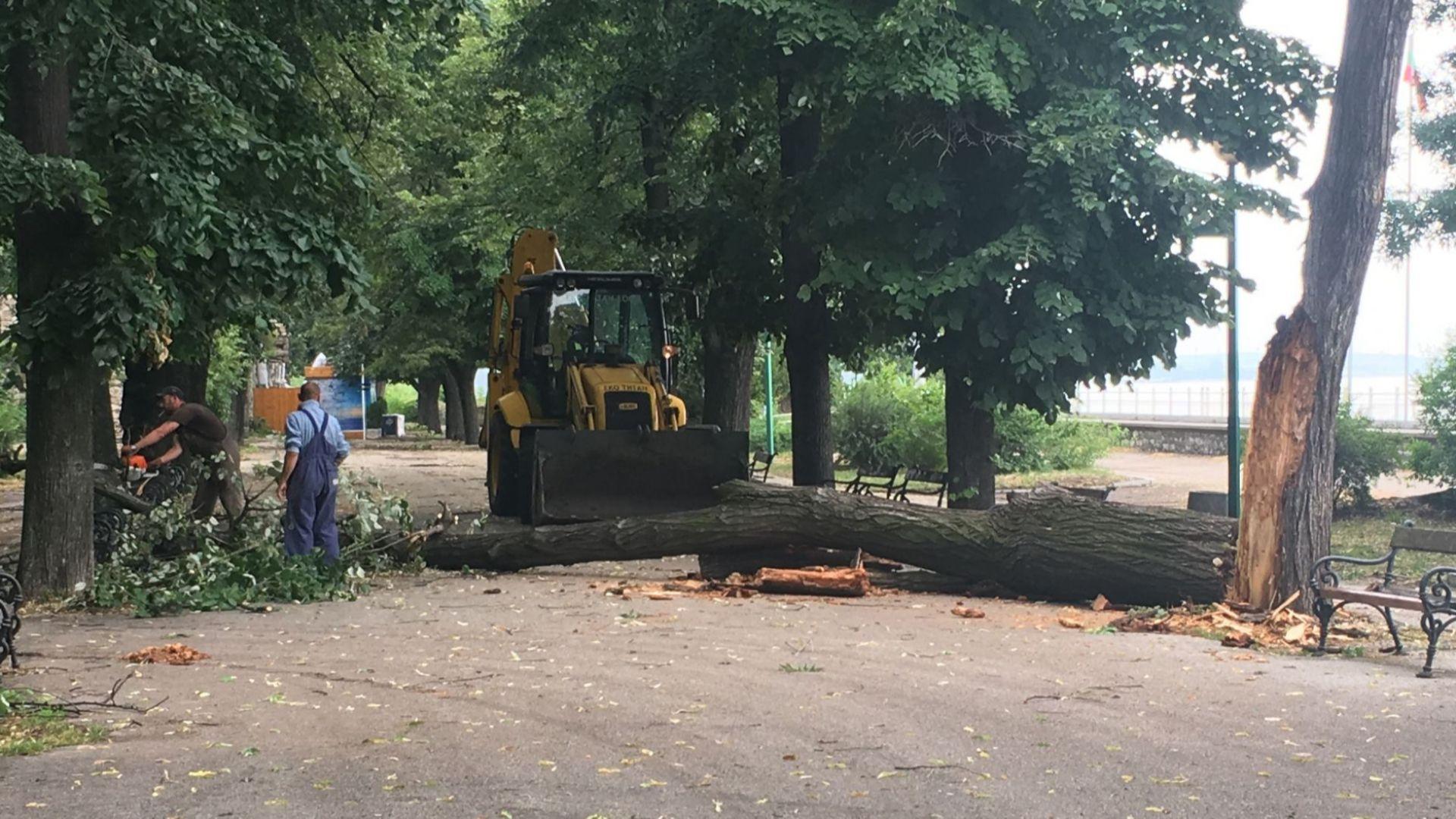 След проливния дъжд освен наводнените улици имаше и паднали дървета