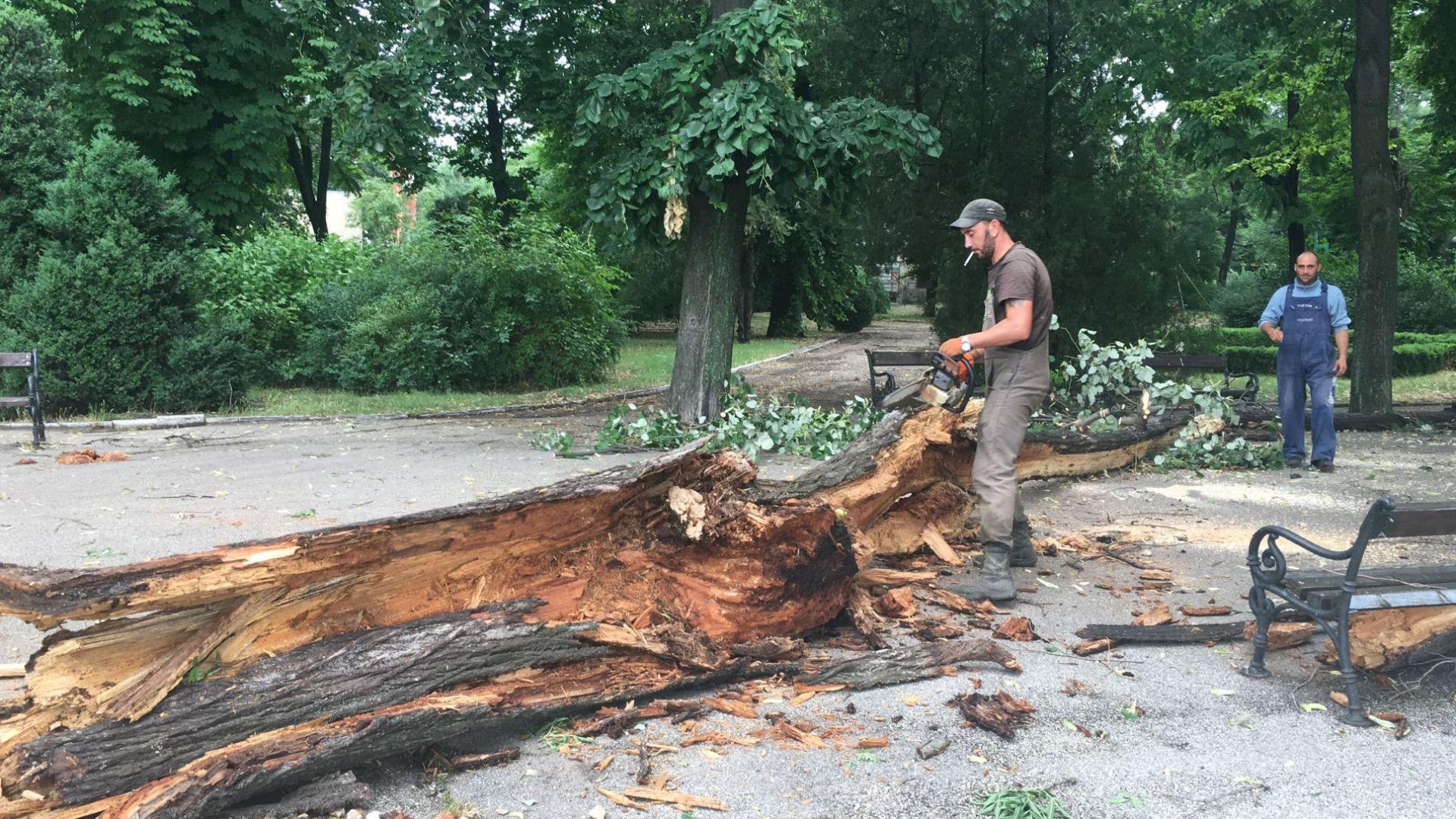 Работници и днес разчистват падналите дървета