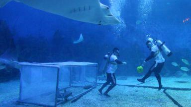 Световното вдъхнови китайци за мач сред акули