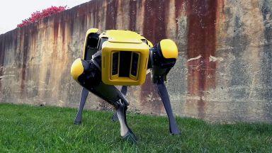 Робот-куче се разходи из Хановер (видео)