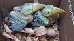"""Интерпол конфискува над 30 000 диви животни при """"Гръмотевична буря"""" в 92 държави, сред тях и България"""