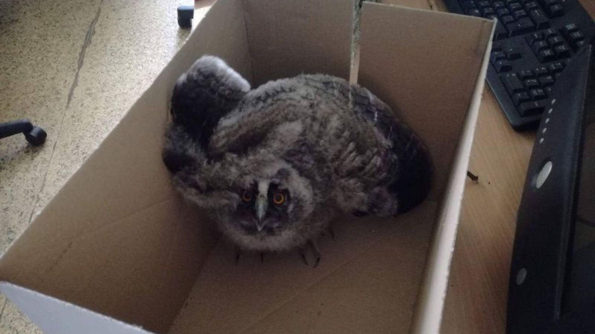 Екоинспектори от РИОСВ-Русе спасили 21 животни за месец