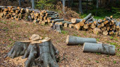 Обезлесяването в световен мащаб (видео)