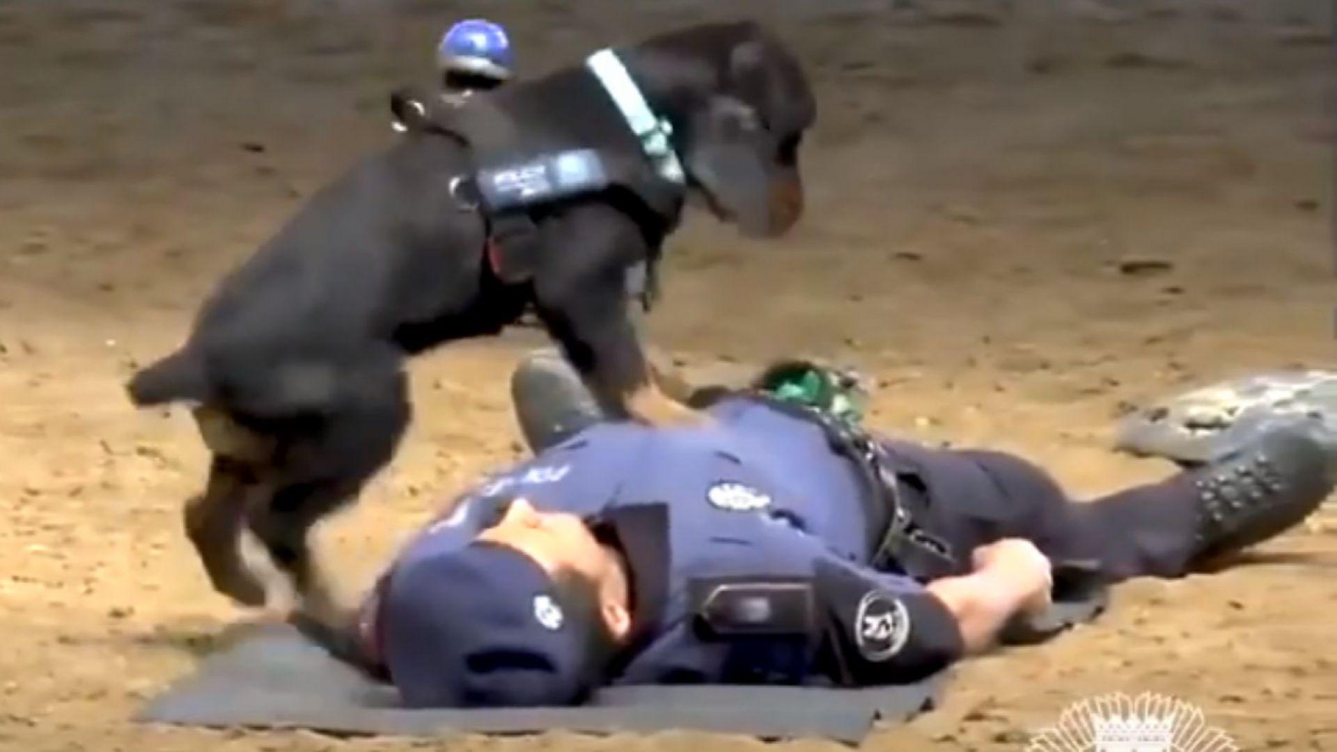 Полицейско куче прави сърдечен масаж на човек