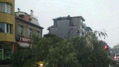 Дървета паднаха върху таксиметрови автомобили в Пловдив