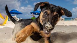 Райски остров предлага гушкане на кученца на плажа (галерия)