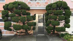 Ексцентричните дървета на Сан Франциско в обектива на Келси Макклелън