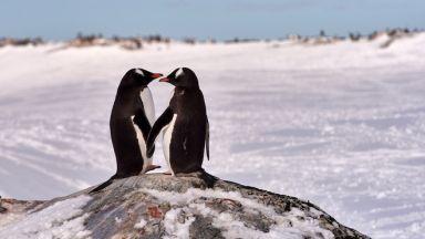 Измерили минус 98 градуса в Антарктида