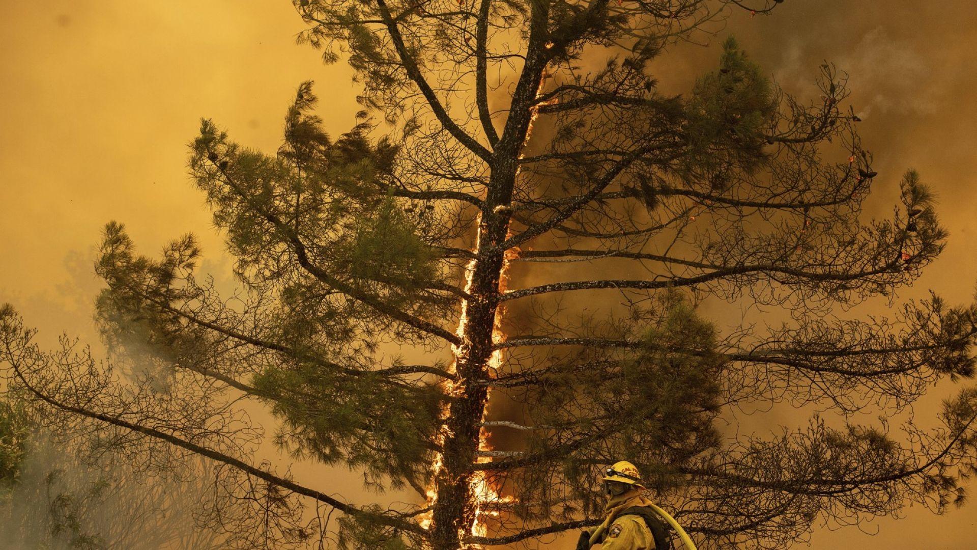 Калифорния в пламъци (снимки)