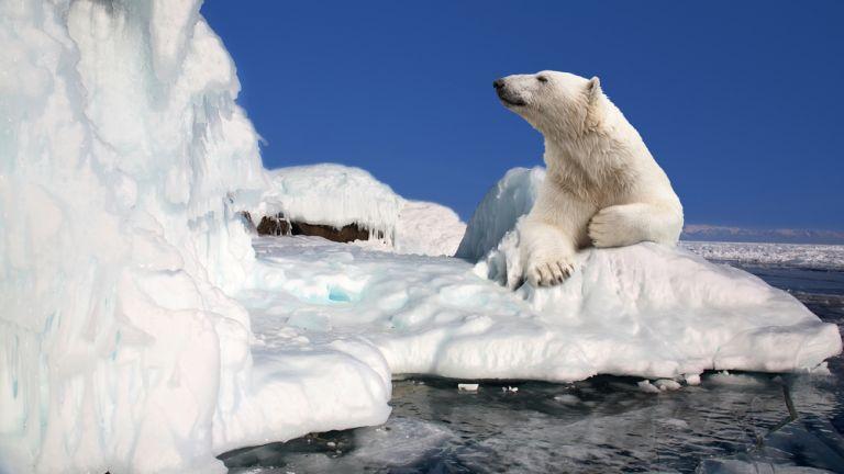 Митовете за климата: Ледът в Антарктика нараства