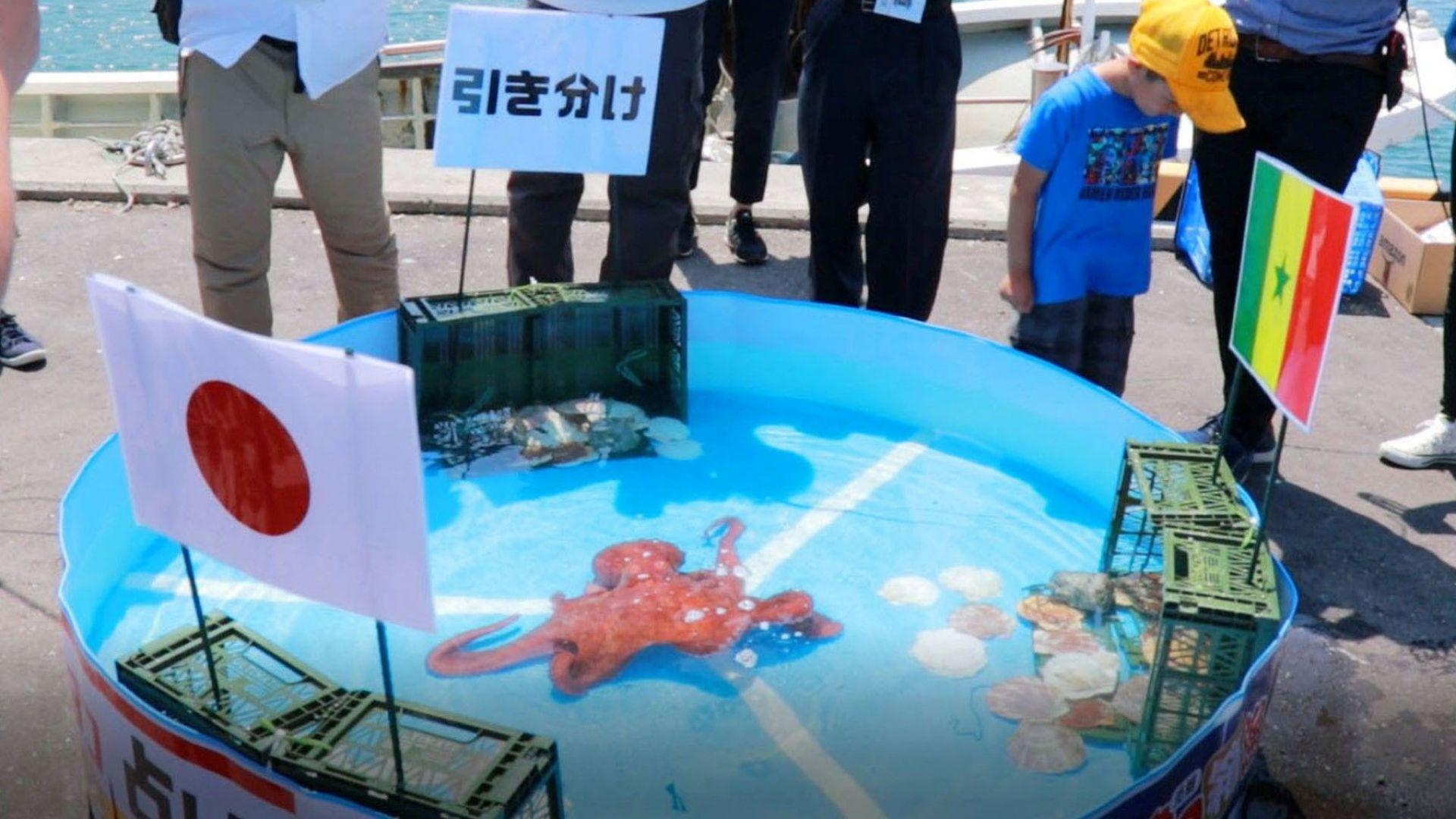 Изядоха октопод-оракул, познал безпогрешно резултатите на Япония