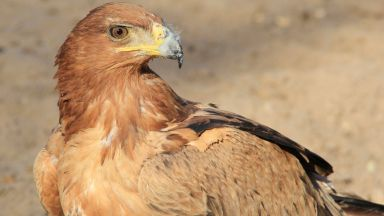 Московски орел ще носи името на Акинфеев