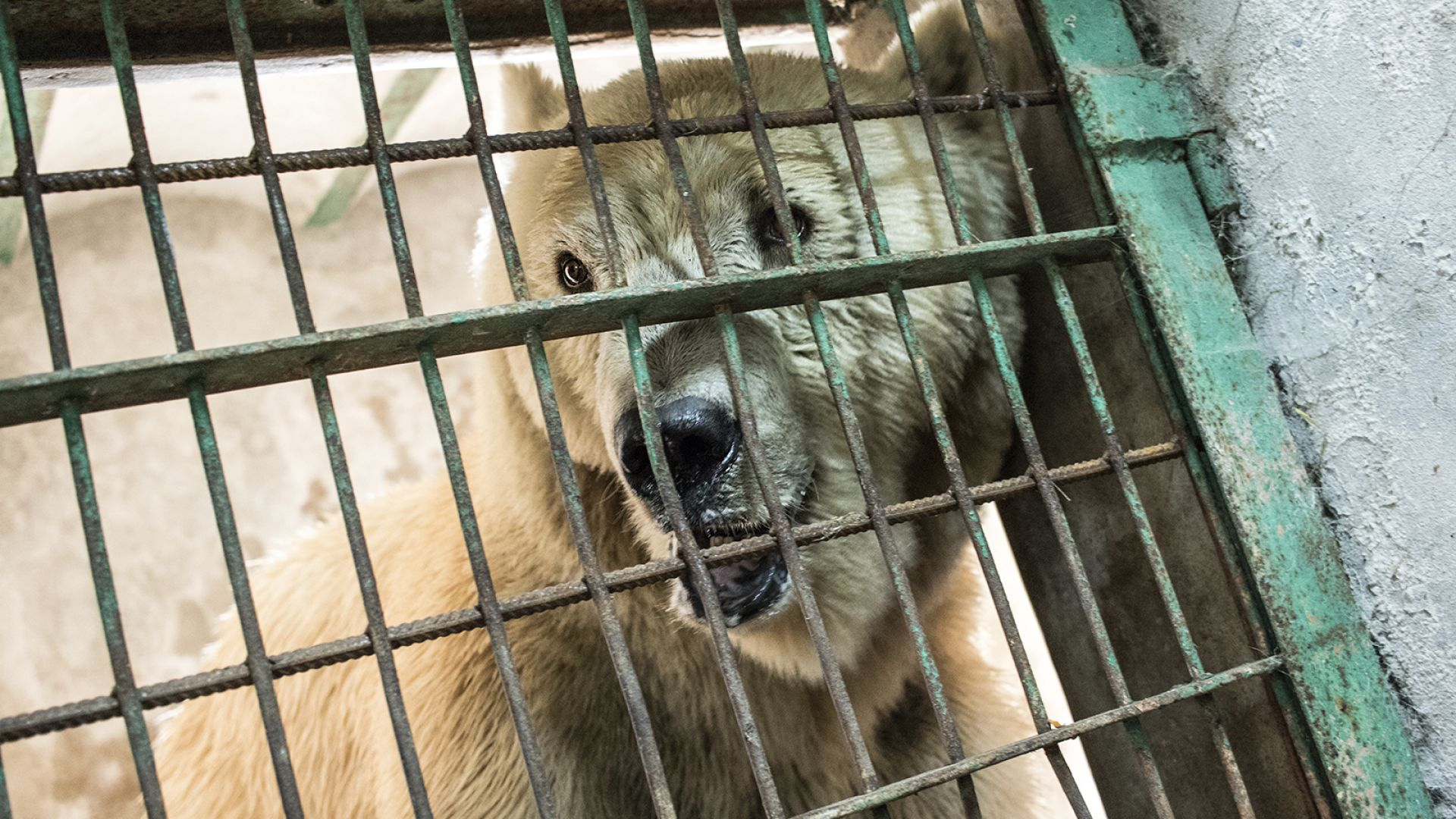 Франция забранява живи животни в цирковете и нови аквариуми