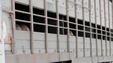 България вдига ограда с Румъния заради чумата по свинете