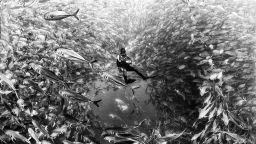 Артистични черно-бели снимки ни потапят дълбоко в океана