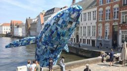 5-тонен син кит предупреждава за опасност от катастрофа на планетата
