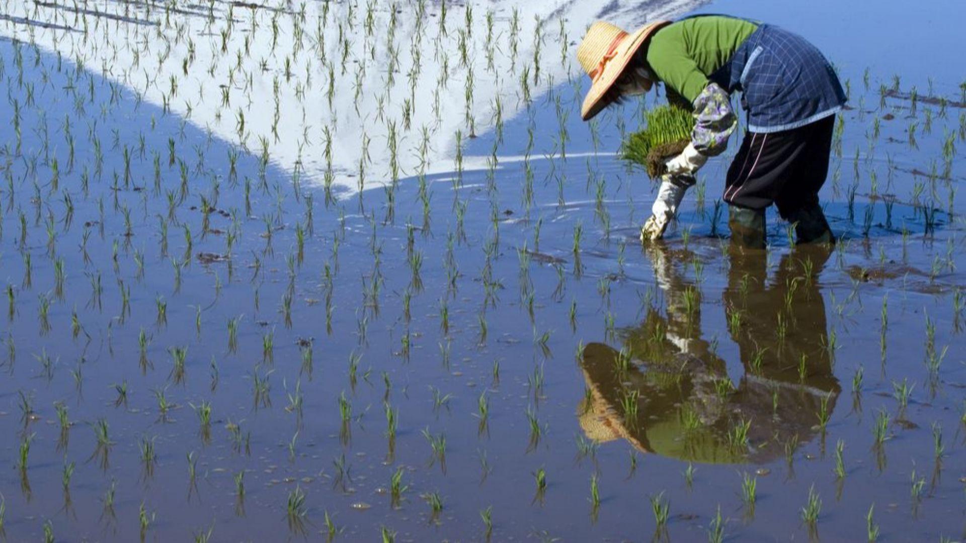 Рекордни количества валеж в Япония