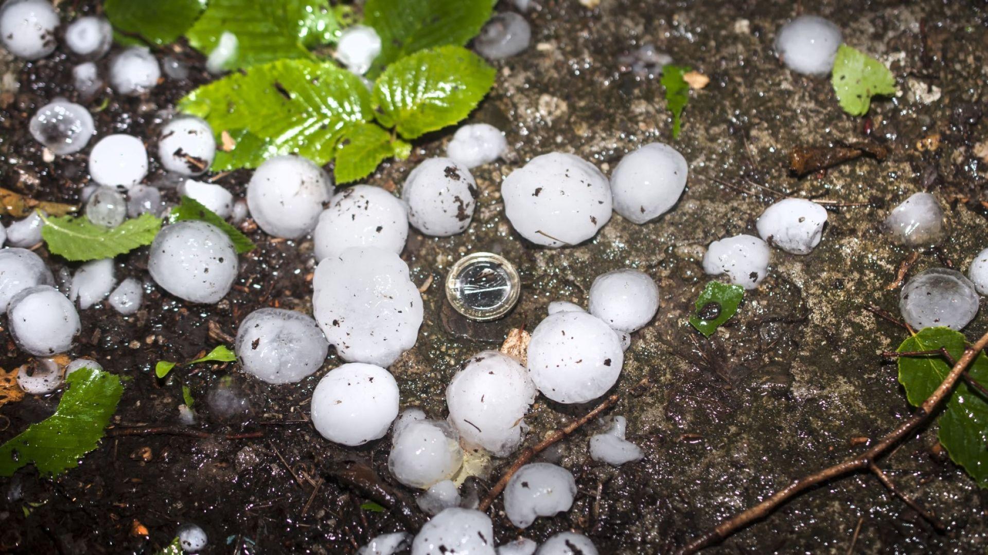 Градушка като яйце унищожи реколтата в Кърджалийско (видео)