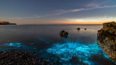 Фотографът Крис Уилямс улови светлината, която им служи за защита
