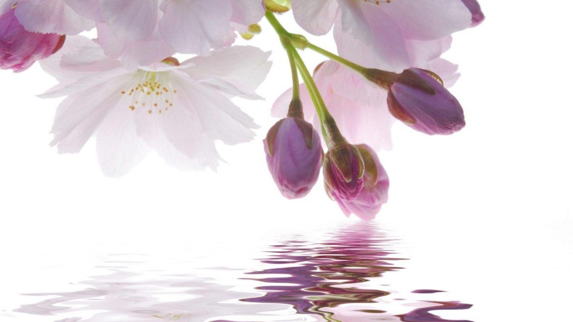 Незапомнените валежи в Япония продължават (видео)