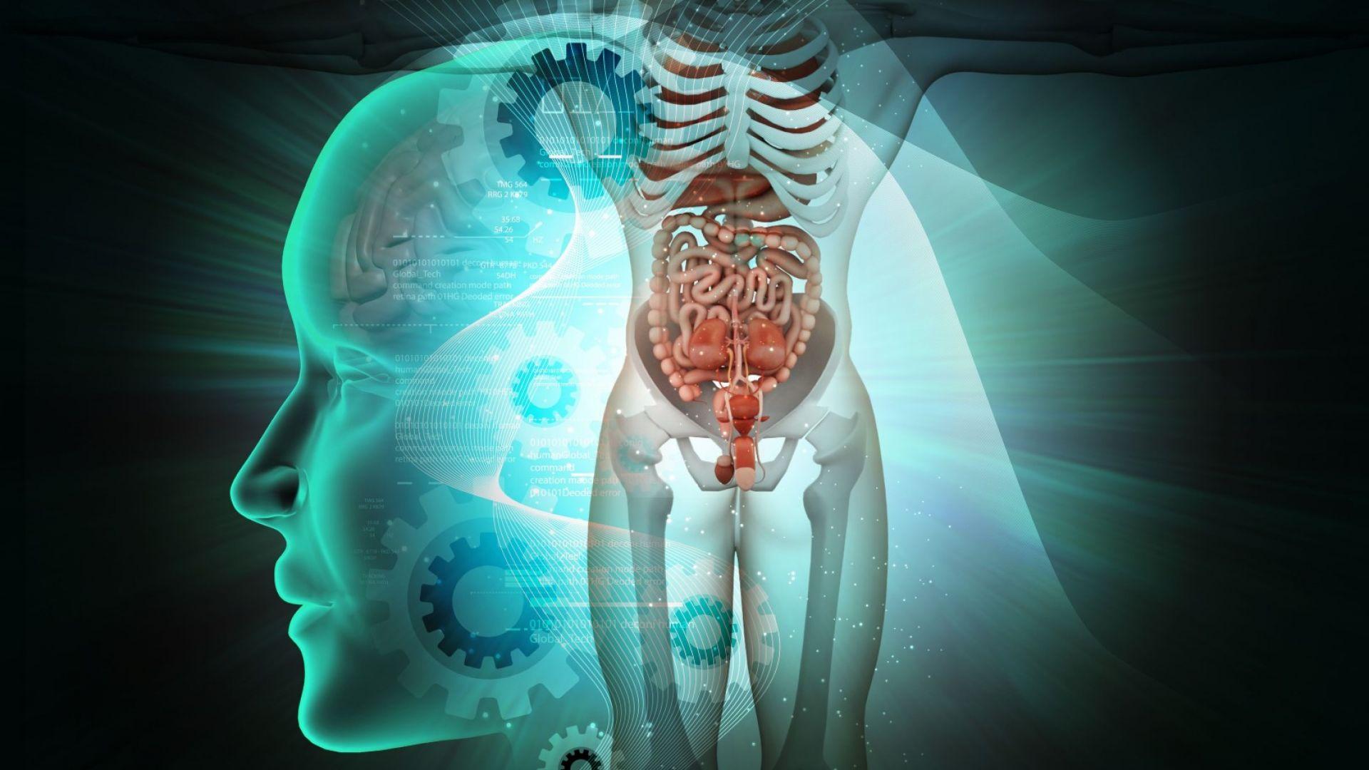 За първи път в света учени направиха триизмерна радиография на човешко тяло