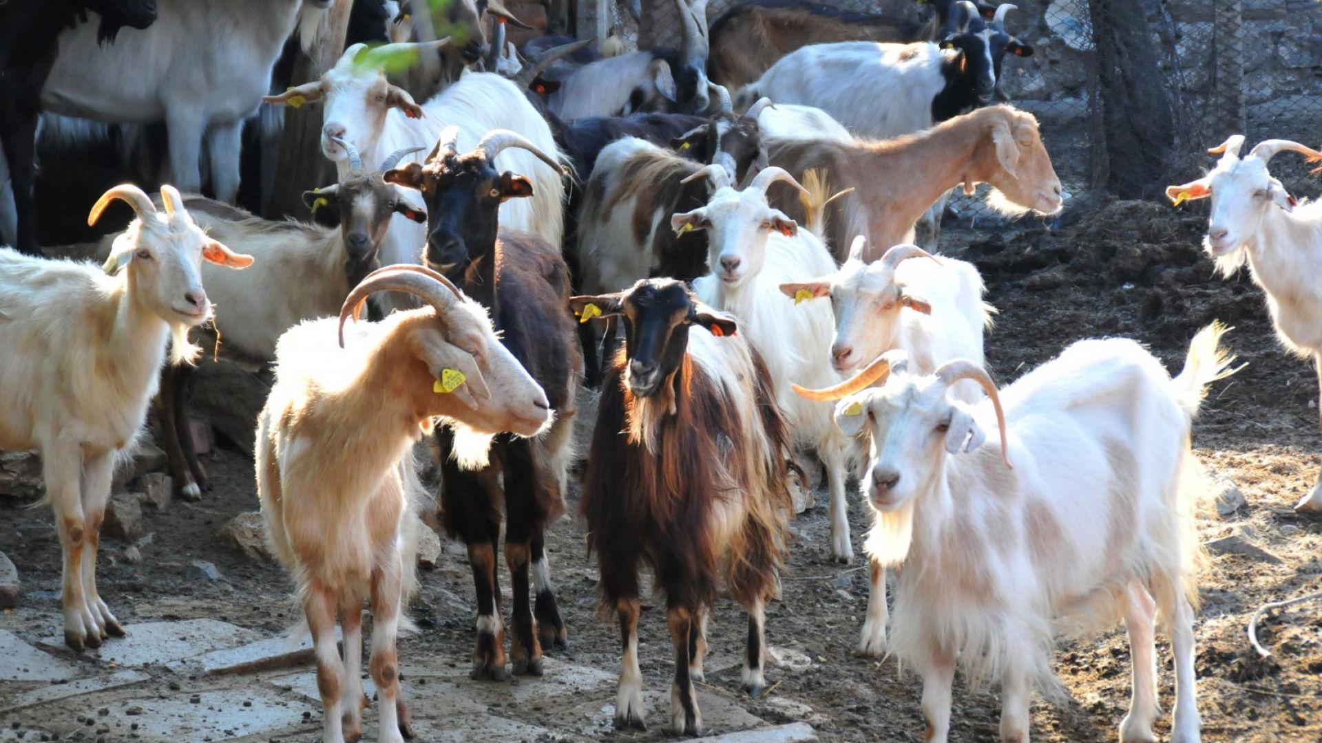 БАБХ преведе над 300 хил. лева като компенсации за убити животни