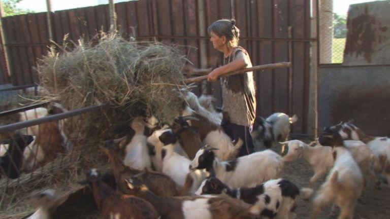 Преустановиха временно евтаназирането на животни в ямболското село Шарково