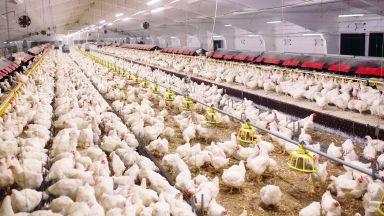 Откриха птичи грип в две ферми в Пловдивско