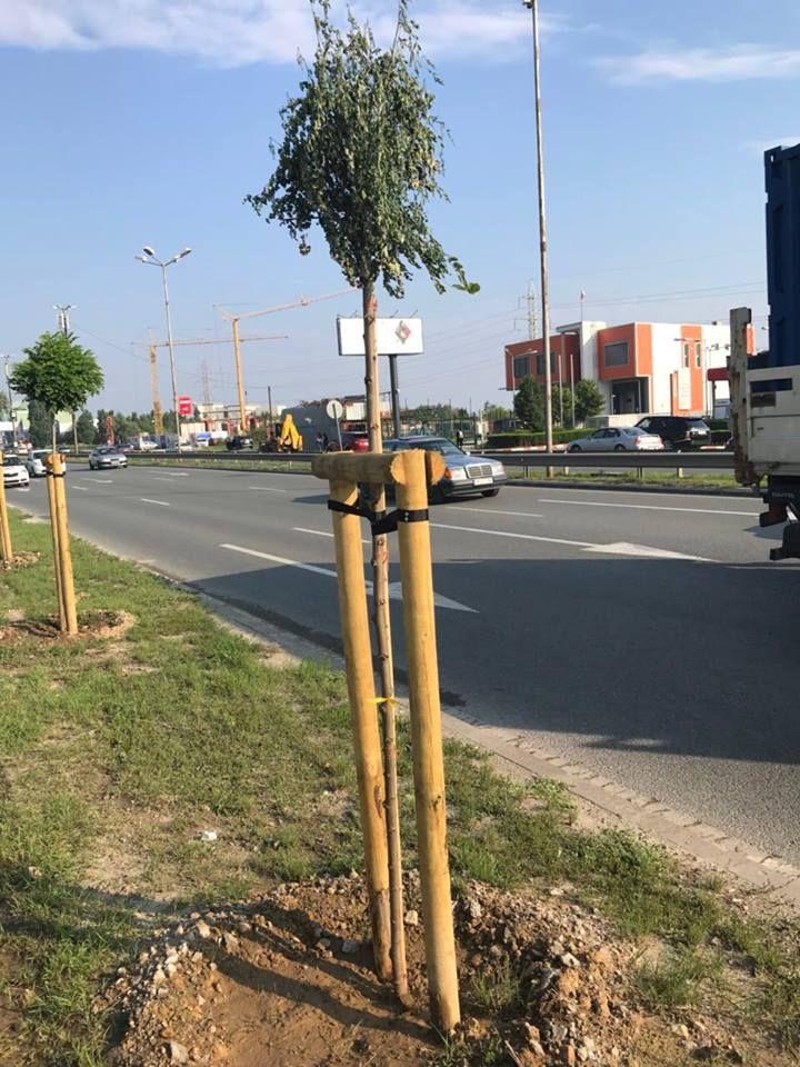 Предстои премахване на дърветата и замяната им с нови