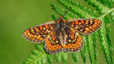 Фотограф и биолог прави брилянтни портрети на изящни пеперуди, кацнали върху цветя