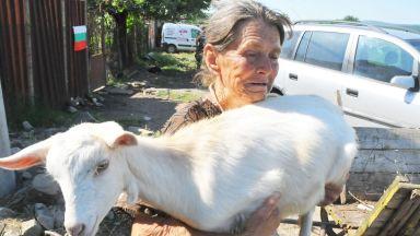 Ще умъртвят животните на баба Дора - не са били в обора. Нинова се усъмни, че има чума