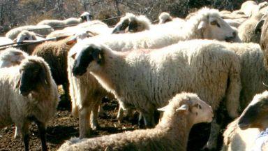 Пръскат входно-изходните артерии на Пловдивска област заради чумата по животните